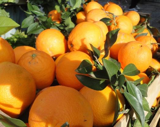 appelsiner-1000pxl